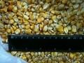 Продам соевый жмых,  кукуруза фуражная
